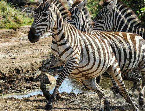 Κένυα – Μομπάσα
