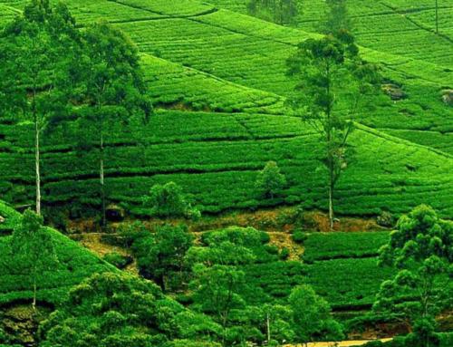 Πανόραμα Σρι Λάνκα | 11 ΜΕΡΕΣ